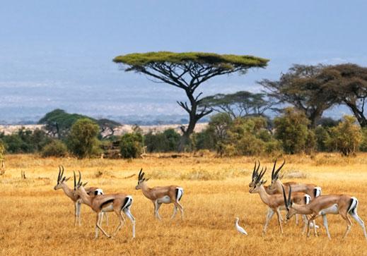 Amboseli, Kenya
